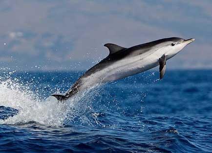 delfin-tenerife
